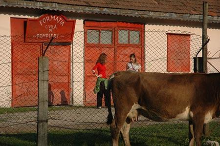 Fetele, vaca si pompierii
